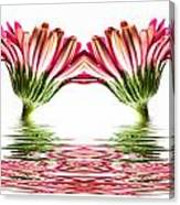Double Pink Gerbera Flood Canvas Print