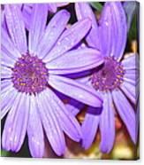 Double Purple Canvas Print
