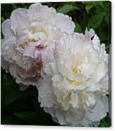 Double White  Peony Canvas Print