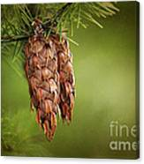 Douglas Fir Cones Canvas Print