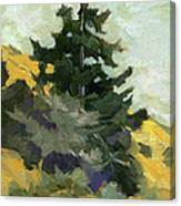 Douglas Fir In Washington Canvas Print