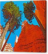 Douglas Firs On Wall Street On Navajo Trail In Bryce Canyon National Park-utah Canvas Print