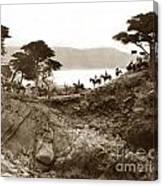 Douglas School For Girls At Lone Cypress Tree Pebble Beach 1932 Canvas Print