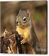 Douglas Squirrel On Stump Canvas Print