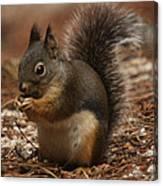 Douglas's Squirrel Canvas Print