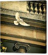 Dove In Flight Canvas Print