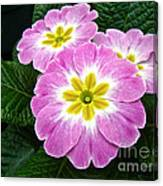 Down On Primrose Lane Canvas Print