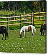 Down On The Ranch Canvas Print