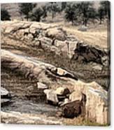 Downhill Sequoia National Park Canvas Print