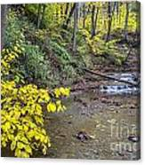 Downstream Blue Hen Falls Canvas Print