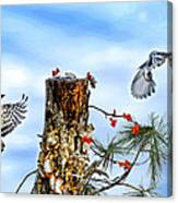 Downy And Titmouse Playing On Lichen Stump Canvas Print