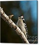 Downy Woodpecker Pictures 25 Canvas Print