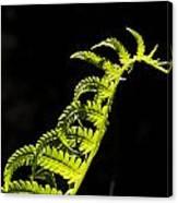 Dragon Fern Canvas Print