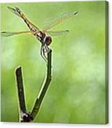 Dragon Fly Canvas Print