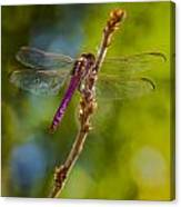 Dragon Fly Or Not Canvas Print
