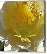 Dragon Fruit Blossom Iv Canvas Print