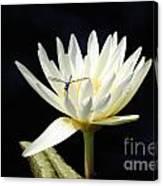 Dragon Lily  Canvas Print