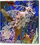 Dragon Sea Horse Canvas Print