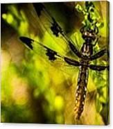 Dragonfly - Dragon Waiting Canvas Print