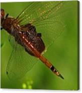 Dragonfly Art 2 Canvas Print