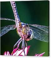 Dragonfly Close Up Canvas Print