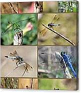 Dragonfly Collage 3 Canvas Print