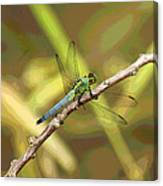 Dragonfly - Common Green Darner Canvas Print