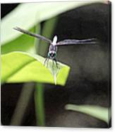 Dragonfly Dimensions Canvas Print