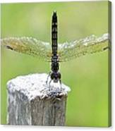 Dragonfly Doing A Handstand Canvas Print