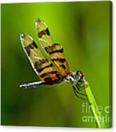 Dragonfly Eating Canvas Print