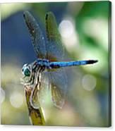 Dragonfly Elegance Canvas Print