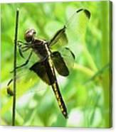 Dragonfly Female Widow Skimmer Canvas Print