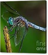 Dragonfly Having Summer Fun Canvas Print
