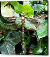 Dragonfly In An English Garden Canvas Print