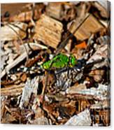 Dragonfly In Mulch Canvas Print