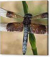 Dragonfly In Summer Canvas Print