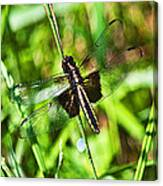 Dragonfly Ins 22 Canvas Print