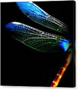 Dragonfly - Insect  7128-005 Canvas Print