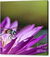 Dragonfly Macro On A Water Lily Canvas Print