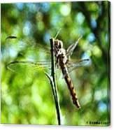 Dragonfly Magic Canvas Print