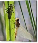 Dragonfly Metamorphosis - Seventh In Series Canvas Print