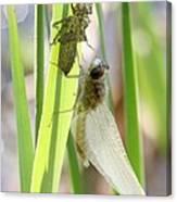 Dragonfly Metamorphosis - Sixth In Series Canvas Print