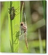 Dragonfly Metamorphosis - Tenth In Series Canvas Print