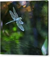Dragonfly No 1 Canvas Print
