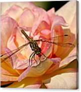 Dragonfly On A Rose Canvas Print