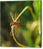 Dragonfly On A Summer Day Canvas Print