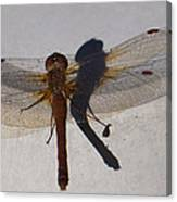 Dragonfly Sees Itself Shadowed II Canvas Print