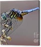 Dragonfly Stance Canvas Print