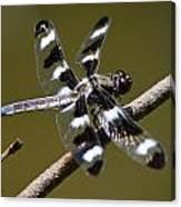 Dragonfly Twelve Spot Skimmer Canvas Print
