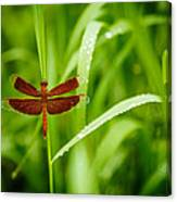 Dragonfly Waits Canvas Print